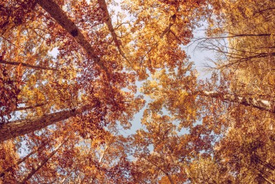 look up fall trees